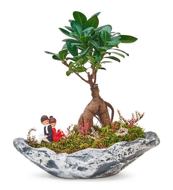 Taş Saksıda Ficus Bonsai ve Sırt Sırta Sevgililer
