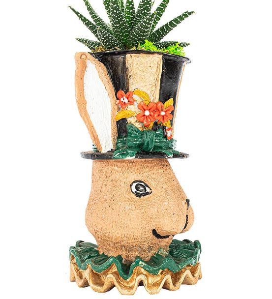 Tavşan Serisi Haworthia Tasarım-Siyah