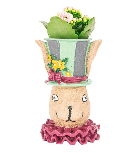 Tavşan Serisi Kalanchoe Tasarım-Pembe
