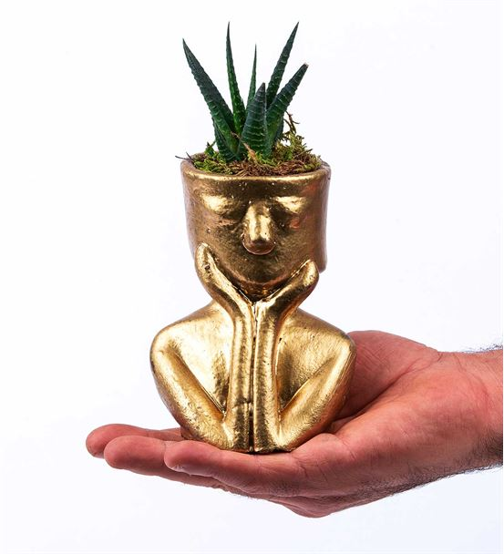 Tink Serisi Gold Saksıda  sukulent
