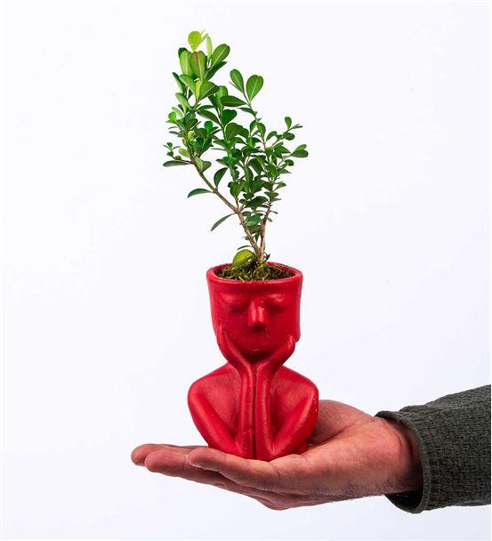 Tink Serisi Red  Saksıda  Mini Orkide