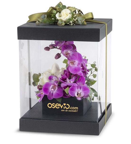 Torrino Kutuda Mor Orkide Aranjmanı
