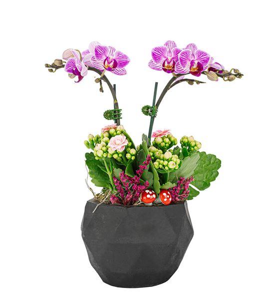 triangle Serisi Mini Orkide Ve Kalanchoe Tasarım