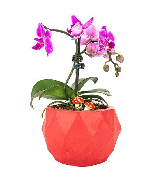 triangle Serisi Tek Dal Mini Orkide Tasarım-Red