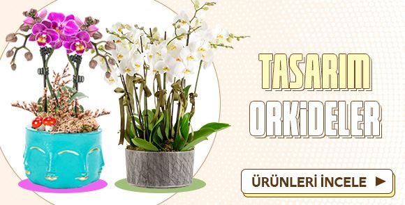 İndirimli Tasarım Orkideler!