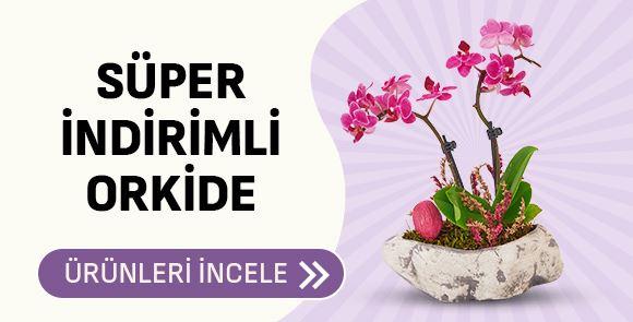 Orkide Süper İndirimler