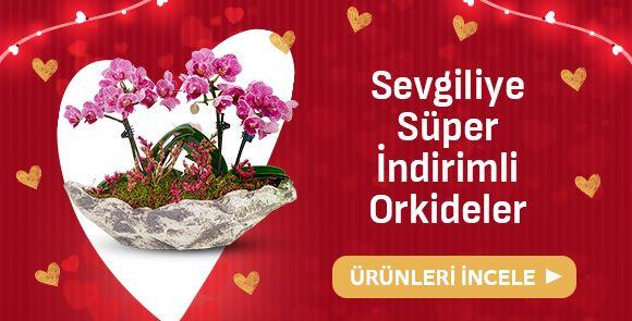 Süper İndirimli Orkideler