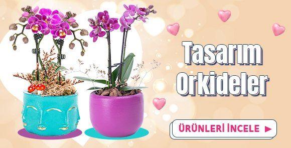 Tasarım Orkideler